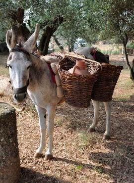 burro con aguaderas